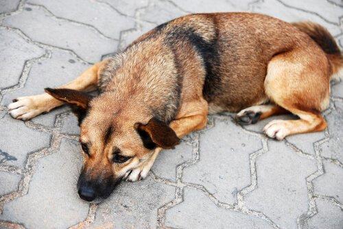 Gelbes Erbrechen bei Hunden kann viele Ursachen haben