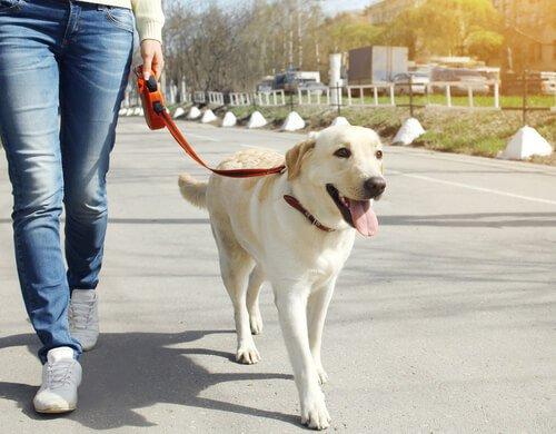 Gesunde Angewohnheiten für Hunde