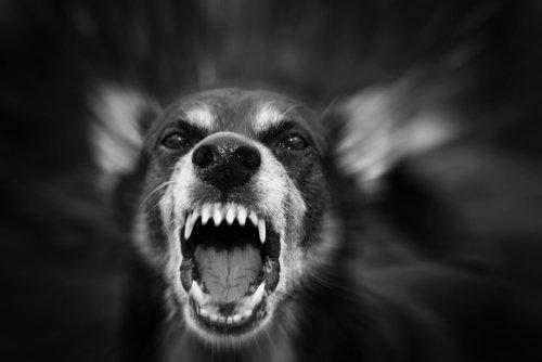 Gründe, warum ein Hund aggressiv werden kann