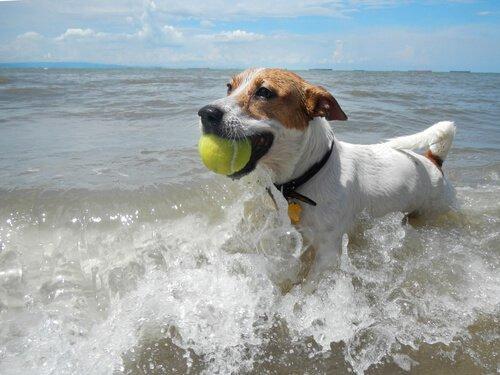 Aktivitäten mit dem Hund am Strand
