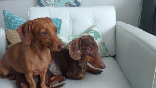 Hunde deprimieren sich allein zu Hause
