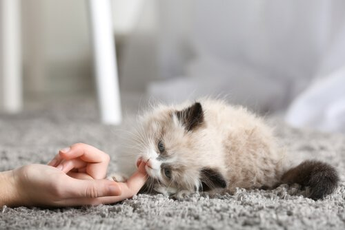 Die ersten Tage einer Katze im neuen Heim