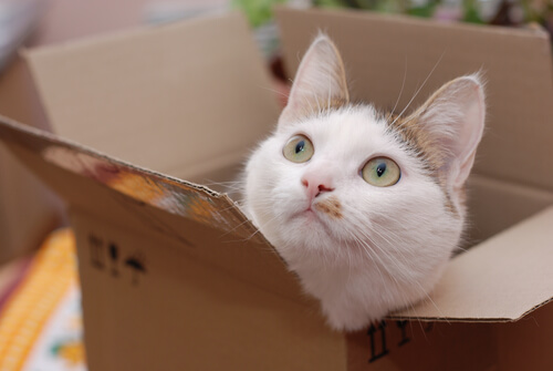 Katze schaut neugierig aus der Kiste