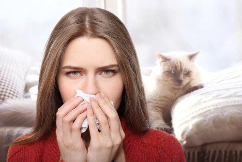 Katzenallergie: Wie man damit umgeht
