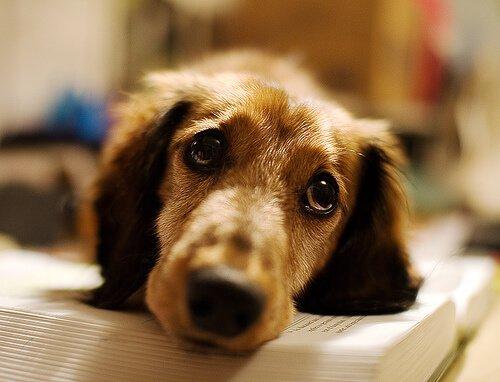 Kranker Hund