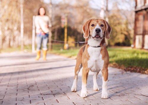 Leinen für Hunde: 7 verschiedene Varianten