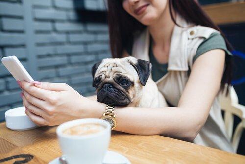 Millennials und Haustiere: eine atypische Beziehung
