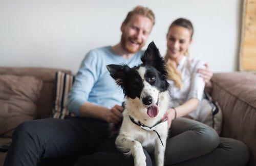 Millennials und Haustiere: eine verschwenderische Beziehung