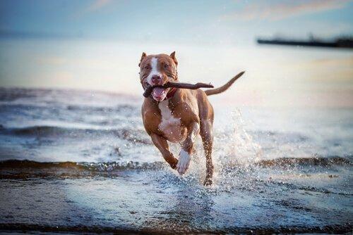 Spiele und Aktivitäten für Hunde