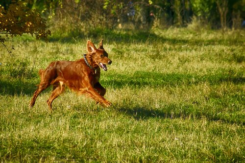 Spiele und Aktivitäten für deinen Hund mit ausreichend Platz