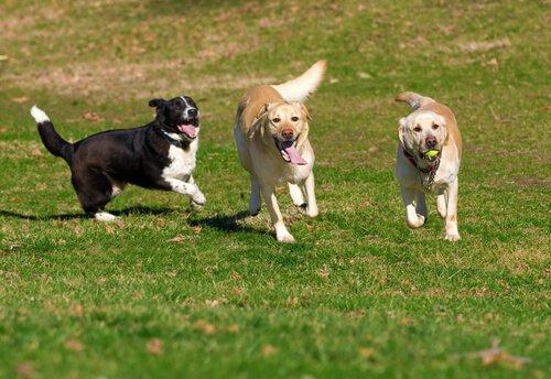 Spiele und Aktivitäten, mit anderen Hunden spielen