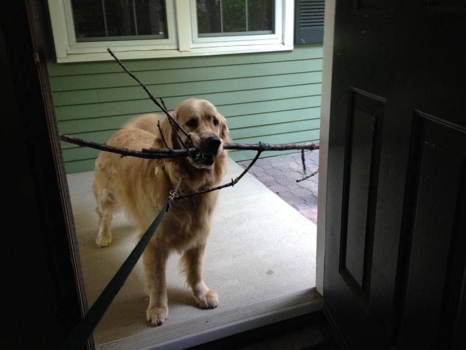 Aktivitäten mit dem Hund: Stöckchen holen!