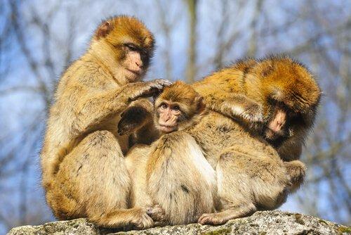 Tierquälerei: Ein Affe mit Kleidung ist nicht natürlich