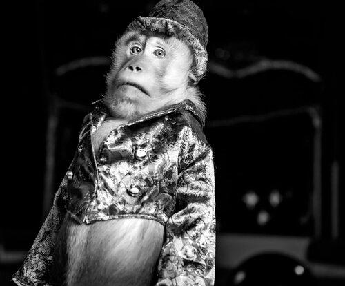 Tierquälerei: Ein Affe mit Kleidung und Hut