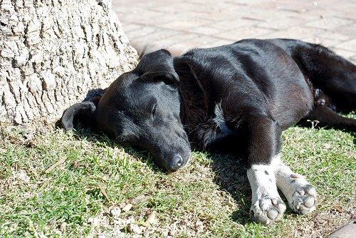 Tödliche Krankheiten bei Hunden: Magendrehung