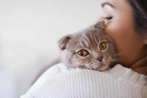 Tödliche Krankheiten bei Katzen: Katzenleukämie