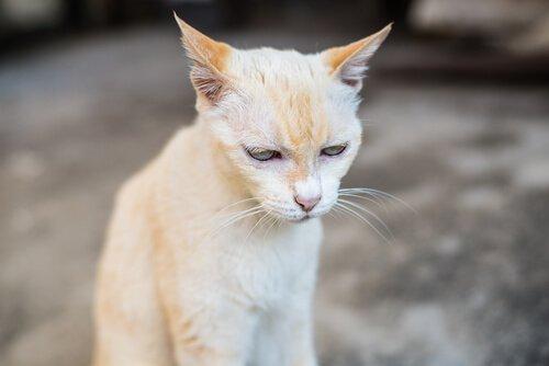 Tödliche Krankheiten bei Katzen: Nierenversagen