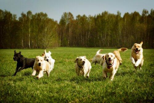 Einen unfehlbaren Ruf für Hunde trainieren
