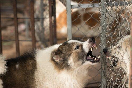 Angst kann einen Hund aggressiv machen