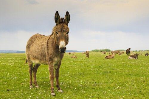 Voraussetzungen, um ein Tier zu adoptieren: hängt von den Wohnverhältnissen ab