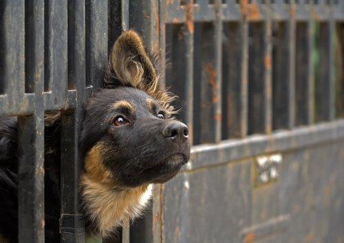Voraussetzungen, um ein Tier zu adoptieren