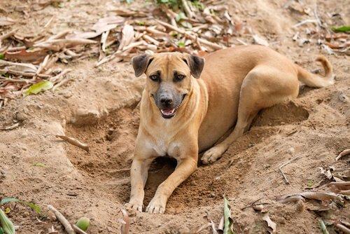 Warum buddeln Hunde nur Löcher?