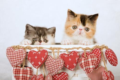 Warum Katzen Kisten lieben