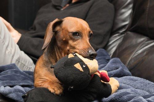 Warum sind Hunde eifersüchtig?