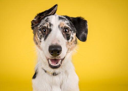 Was ist das Projekt Gelber Hund?