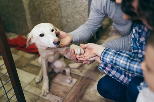 Ein Freiwilliger im Tierheim beim Geld sammeln