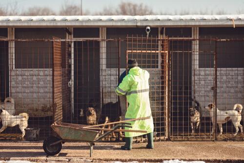 Ein Freiwilliger im Tierheim bei Reinigungsarbeiten