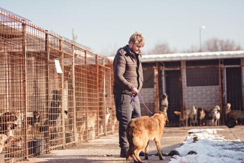 Ein Freiwilliger im Tierheim beim Spaziergang