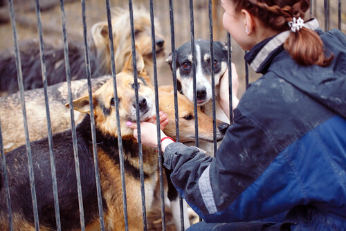 Was macht ein Freiwilliger im Tierheim?