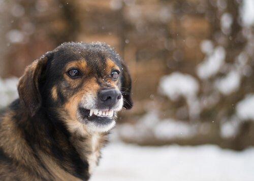Schmerzen können einen Hund aggressiv machen