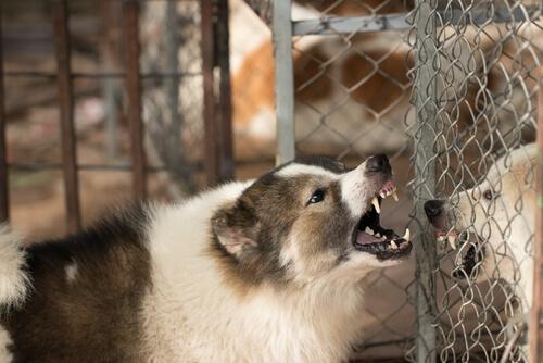 Wie man einen aggressiven Hund behandelt