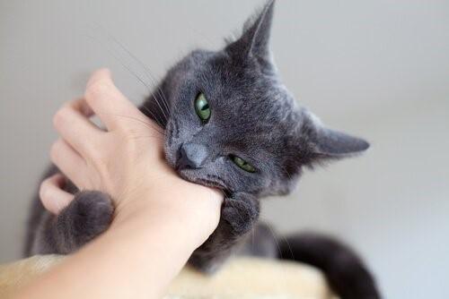Was tun, wenn dich deine Katze beißt?