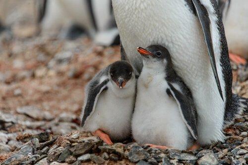 Werde Pate für einen Pinguin