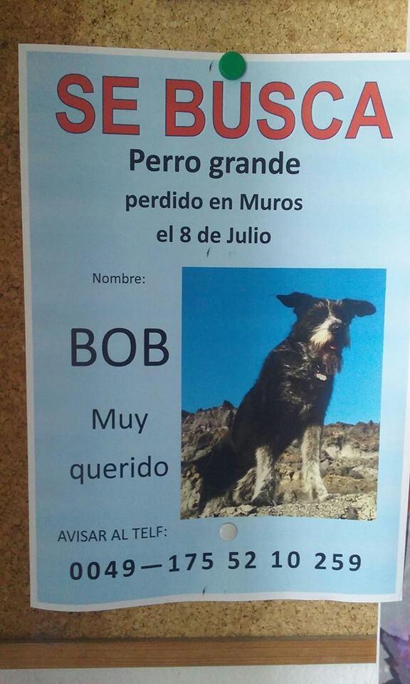 Wie hat sich der Hund Bob verirrt?