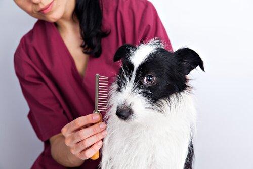 Zeit für Fellpflege. Soll ich das Hundefell stutzen?