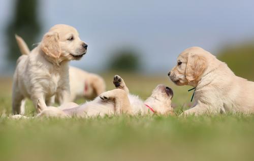 6 Ruhepositionen von Hunden: Rückenlage