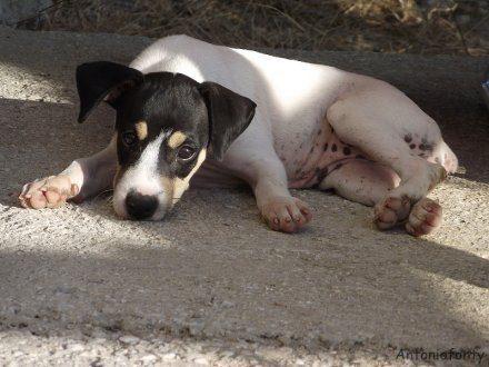 6 Ruhepositionen von Hunden: Seitliche Bauchlage