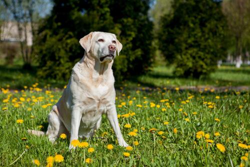 6 Ruhepositionen von Hunden: Sitzen