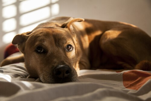 Sozialisierung eines ängstlichen und gestressten Hundes