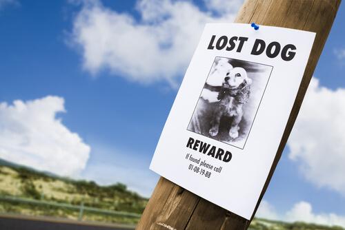 4 Apps, um deinen Hund wieder zu finden