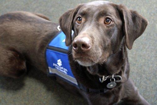 5 verschiedene Arbeiten für Hunde