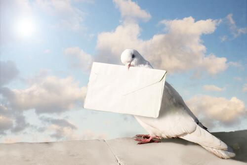 Berühmte Tiere - Die Taube Cher Ami