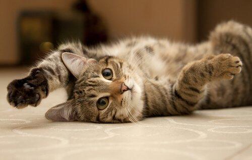 Bewegungsmangel bei Haustieren: Katze liegt