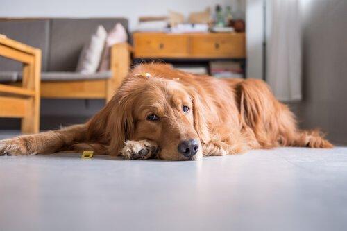 Bewegungsmangel bei Haustieren