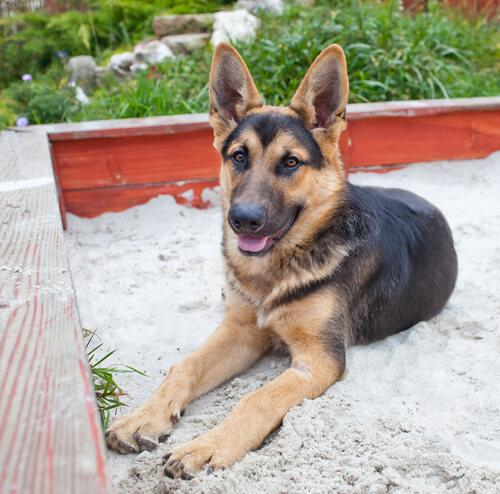 Bring deinem Hund bei, das Hundeklo zu benutzen