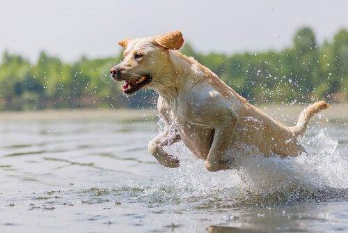 Wie kannst du deinen Hund richtig trainieren?
